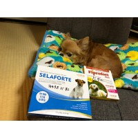 セラフォーテ小型犬用6本入り(レボリューションジェネリック)