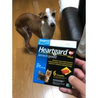 ハートガードプラス(カルドメックチュアブル)小型犬用