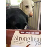 ストロングハートプラス・チュアブル大型犬用