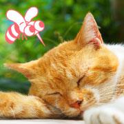猫のフィラリア