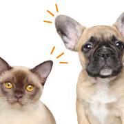 犬猫が外耳炎や中耳炎なら!