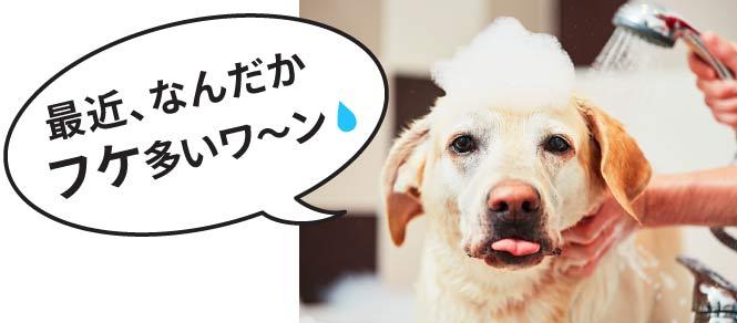 犬猫のフケ