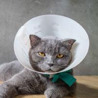 猫の薬ランキング