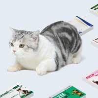 猫専用のお薬