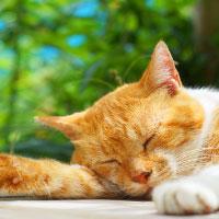 猫のフィラリアについて