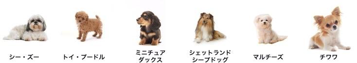発症しやすい犬種