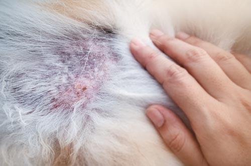 皮膚糸状菌症