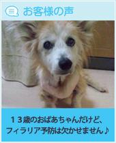pkhyoban-20140604-4.jpg