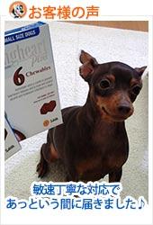 pkhyoban20130620-2.jpg