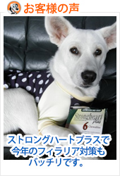review-STRONGHEART-PLUS-FOR-MEDIUM-DOG-20121112.jpg