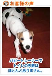 revuew-puppytrainer-apr11.jpg