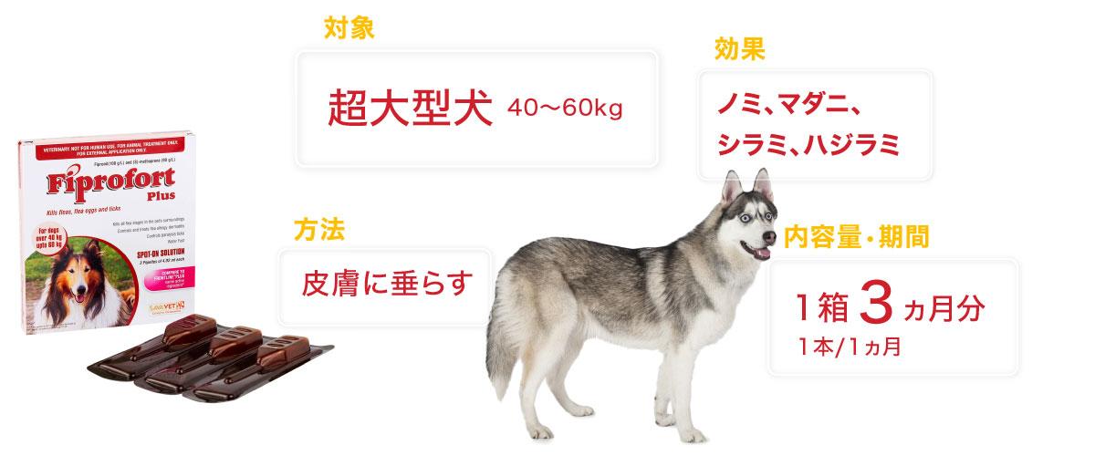 フィプロフォートプラス超大型犬用の特徴